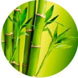 Экстракт побегов бамбука